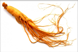 Ginseng root herb